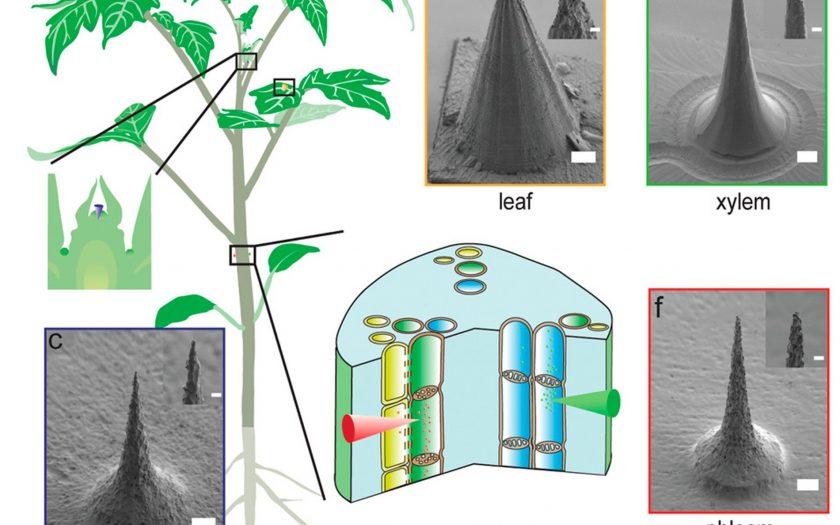 Innovation in Ecology - blog.masstar.ru